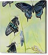 Swallowtail Story Canvas Print