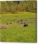 Swamp After Drout Canvas Print