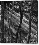 Swamp At Sunset Canvas Print