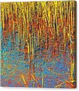 Swamp Colors Canvas Print