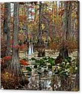 Swamp In Fall Canvas Print