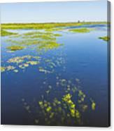 Swamp Lanscape II Canvas Print