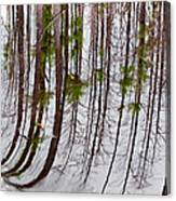 Swamp Reflection Canvas Print