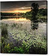 Swamp Sunrise Canvas Print