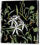 Swamplilies Canvas Print
