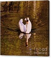 Swan At Susan Lake Canvas Print