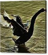Swan Dance 2 Canvas Print