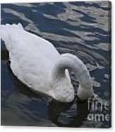 Swan Dining Canvas Print