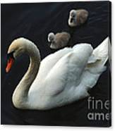 Swan Family 1 Canvas Print
