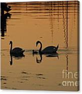 Swan Family At Sunset Canvas Print