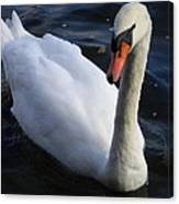 Swan Flying In The Water  Denmark Canvas Print