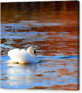 Swan Gold And Blue Canvas Print