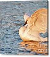 Swan In Golden Light Canvas Print