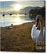 Swan On The Beach Canvas Print