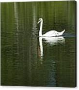 Swan On Wintergreen Lake Canvas Print