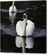 Swan Pair 2 Canvas Print