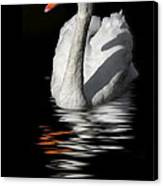 Swan Riflected In The Dark Canvas Print