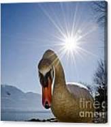 Swan Saying Hello Canvas Print