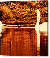 Swan Song 4 Canvas Print