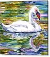 Swan Summer Canvas Print