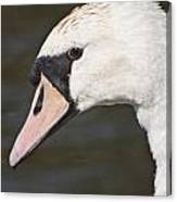Swan's Head Canvas Print