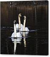 Swans In A Row Canvas Print