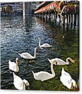 Swans Of The Chapel Bridge Canvas Print