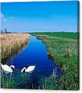 Swans On Bog, Near Newcastle, Co Canvas Print