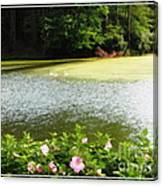 Swans On Pond And Hibiscus With Oil Painting Effect Canvas Print