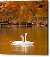 Swans Soft And Smooth Canvas Print