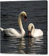 Swans Swimming Canvas Print
