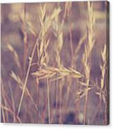 Swaying In The Soft Summer Breeze Canvas Print