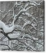 Swedish Winter Canvas Print