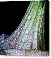 Sweet And Rainy Canvas Print