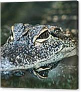 Sweet Baby Alligator Canvas Print