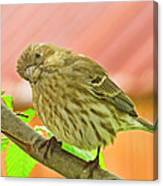 Sweet Finch Painted Effect Canvas Print