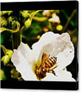 Sweet Nectar Shot Canvas Print