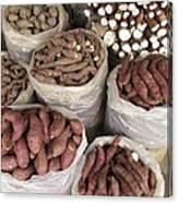 Sweet Potato And Cassava Roots Canvas Print