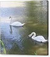 Swimming Swans Canvas Print