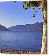 sycamore tree at the Lake Maggiore Canvas Print