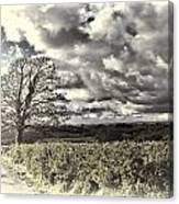 Sycamore Tree Cream Canvas Print