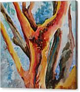 Symphony Of Branches Canvas Print