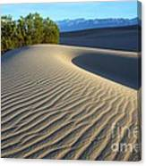 Symphony Of The Sand Canvas Print