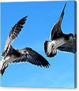 Synchronized Flying Canvas Print
