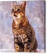 Tabby Cat Portrait Of A Cat Canvas Print