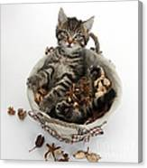 Tabby Kitten In Potpourri Basket Canvas Print