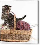 Tabby Kitten Playing With Knitting Wool Canvas Print