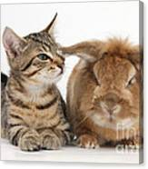 Tabby Kitten With Rabbit Canvas Print