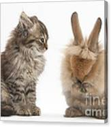 Tabby Kitten With Young Rabbit, Grooming Canvas Print