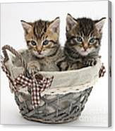 Tabby Kittens In A Basket Canvas Print